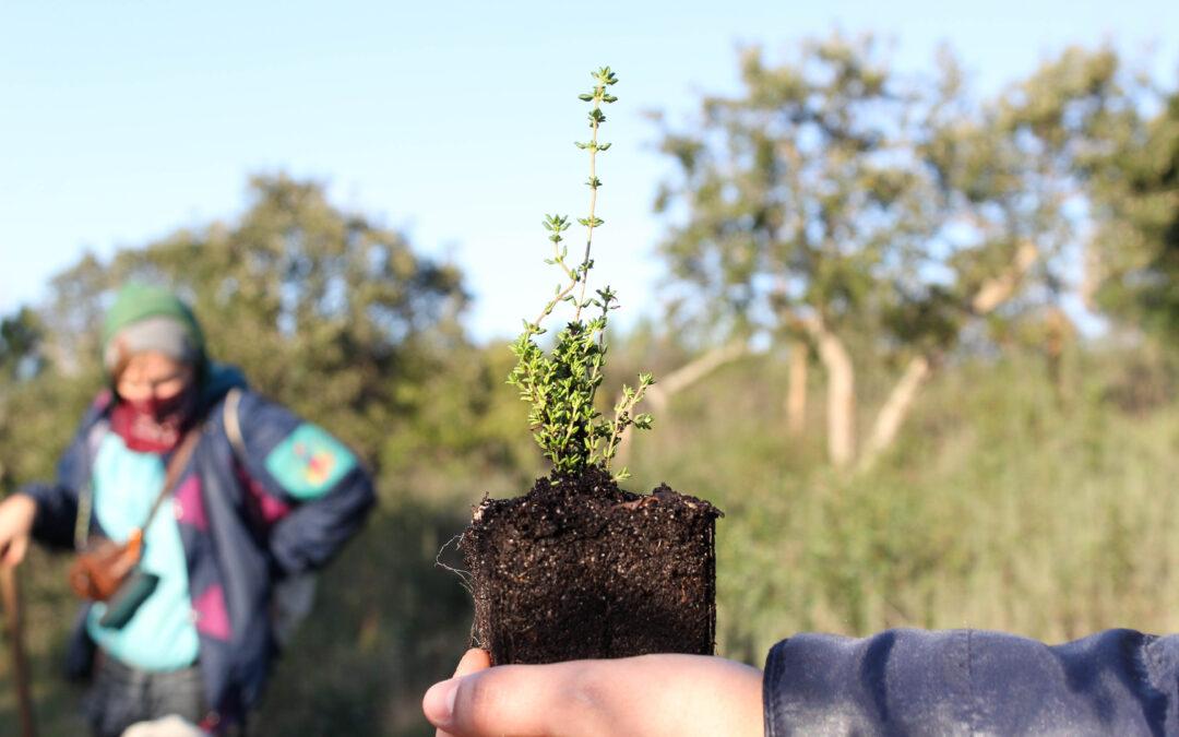 Mais Árvores Ribeira Abaixo – Reflorestar para combater as Alterações Climáticas
